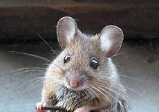 Animali e animaletti: czy mysz kradnie w bibliotece?
