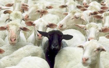 Animali i animaletti: owca nie tylko czarna