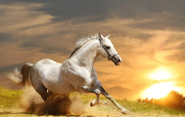 Animali e animaletti: końska dawka przysłów