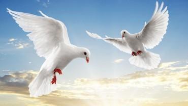 Animali e animaletti: gołębie, gołębice i gołąbska