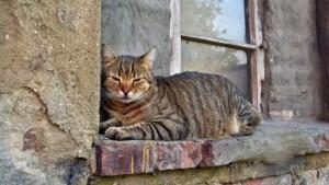 gatto_davanzale-620x350