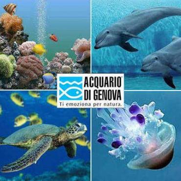 Czy warto zobaczyć Acquario di Genova?