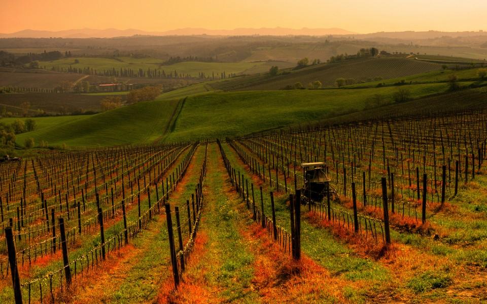 Wino, kogut i Florencja