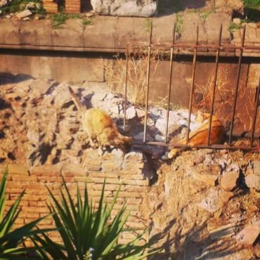 Gatti romani, czyli Wieczne Miasto Kotów